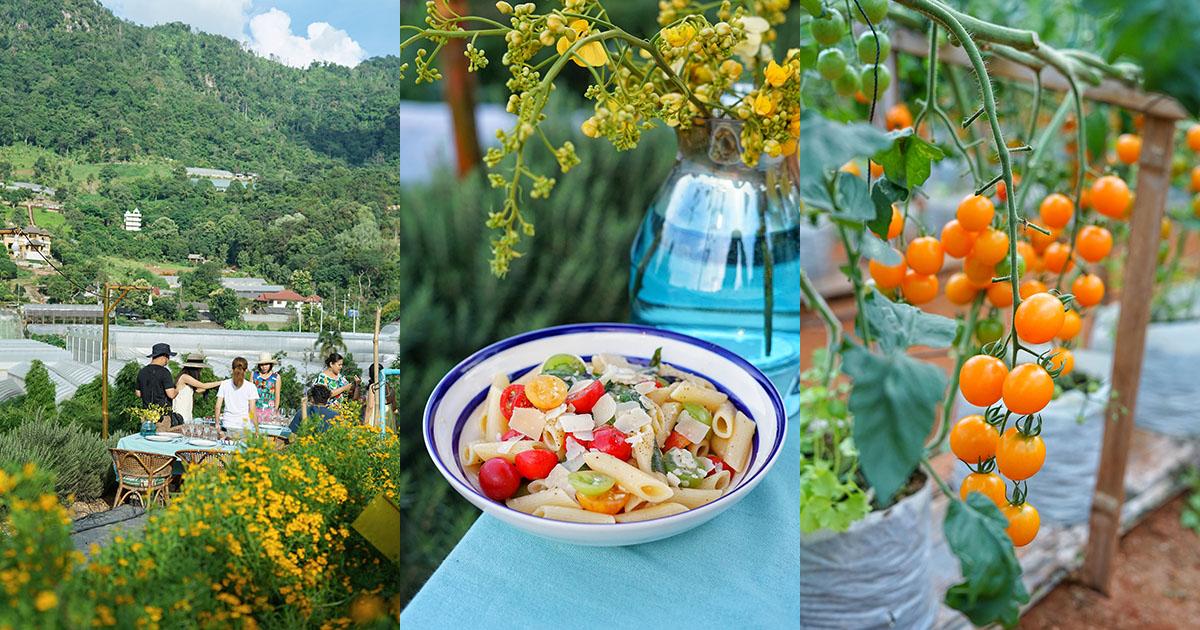 ตลุยฟาร์มมะเขือเทศ เที่ยวชมสวนผักออร์แกนิก บนเนินเขาวิวสวย พร้อมดินเนอร์สุดสดชื่นที่ Greensgarden Farm